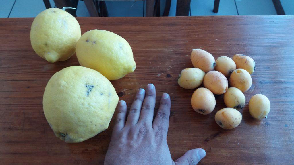 Lemons and Loquat
