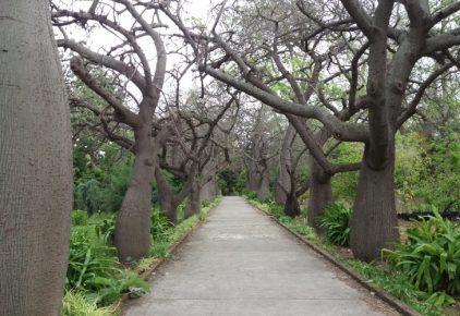 Orto Bontancio De Palermo (Botanical Gardens)